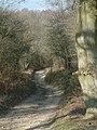 Bridleway near Red Lodge - geograph.org.uk - 370270.jpg
