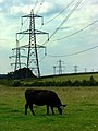Broadclyst, Power Lines looking West - geograph.org.uk - 1415814.jpg