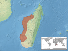 Brookesia brygooi distribution.png