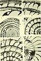 Bulletins of American paleontology (1960) (20503164775).jpg