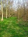 Butlett's Wood - geograph.org.uk - 383622.jpg