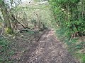 Byway towards Woodlands - geograph.org.uk - 1256318.jpg