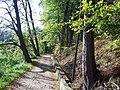 CHOSZCZNO- droga wookół jeziora - panoramio.jpg