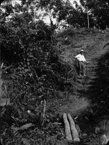 File collectie tropenmuseum onontgonnen stuk grond op een rubberonderneming oost sumatra tmnr - Een stuk grond ontwikkelen ...