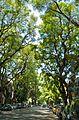 Calle Honduras.jpg