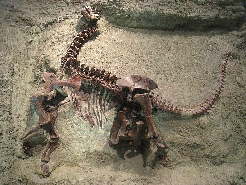 File:Camarasaurus lentus - IMG 0666.jpg