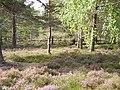 Cambusmore - geograph.org.uk - 236907.jpg