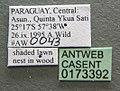 Camponotus atriceps casent0173392 label 1.jpg