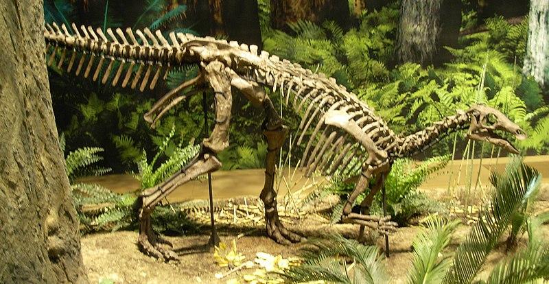 ไฟล์:Camptosaurus at CMNH.jpg