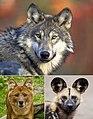 Canina portraits.jpg