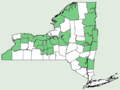 Carex hitchcockiana NY-dist-map.png