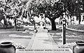 Carlsbad CA - The Carlsbad Hotel, Patio Showing Legendary Weeping Eucalyptus Tree (NBY 429858).jpg
