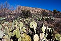 Carlsbad Caverns National Park and White's City, New Mexico, USA - 48344870612.jpg
