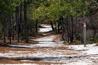 Carolina Beach State Park - Hiking trails can be found throughout the park.