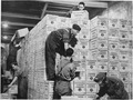 Cases of TNT gunpowder shipped from the USA under lend-lease are stacked in the dump in a tunnel 100 feet underground... - NARA - 196328.tif