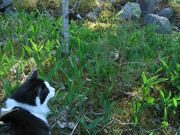 Cat and blue tit.jpg