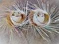 Chapeu de palha de carnaúba em Coreaú..jpg