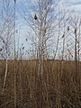 Cherkas'kyi district, Cherkas'ka oblast, Ukraine - panoramio (1004).jpg