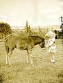 Cheryl feeding colt, Crystal Springs Ranch (A.W. Smither), Salem, Oregon (6360151817).jpg