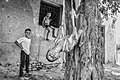 Children playing on the tree2.jpg