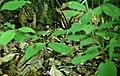 Chipmunk-with-nut-wildlife 9 - West Virginia - ForestWander.jpg