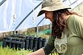 Christina McKnew manages the Return of the Natives greenhouse on the California State University, Monterey Bay campus. (33071756546).jpg