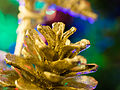 Christmas cone (11392422356).jpg