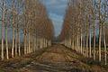 Ciclabile-greenway-adda-1.jpg