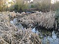 Cippenham, Deerwood Park pond - geograph.org.uk - 1116380.jpg