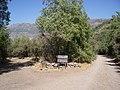 Cipreses (Ranchillo y Tricahues). - panoramio.jpg