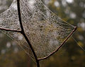 Cobweb after rain (4031450069).jpg