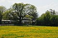 Colourful meadow at Gulden Bodem Arnhem-Schaarsbergen with fresh oakleaves - panoramio.jpg