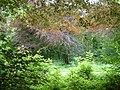Colours of Late Summer in Leigh Woods - panoramio.jpg