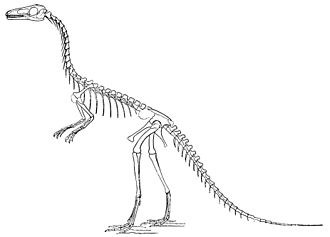 Compsognathus - Skeletal reconstruction by Marsh, 1896