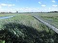 Cooper Marsh Conservation Area 25.jpg