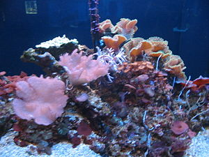 Mote Marine Laboratory - Coral on display.