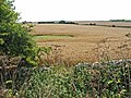 Cornfields near Cloughton - geograph.org.uk - 217929.jpg