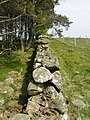 Cotgibbon Wall - geograph.org.uk - 799980.jpg