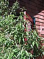 Cottages in the Berkeley Biogarden 03.jpg
