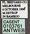 Crematogaster ashmeadi casent0103761 label 1.jpg