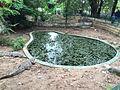 Crocodile de Parc Hann.jpg
