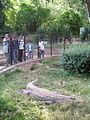 Crocodile exhibit - Tsimbazaza Zoo.jpg