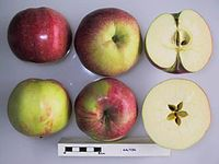 Cross section of Galton, National Fruit Collection (acc. 1930-047).jpg