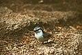 Crouching bird.jpg