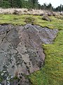 Cup and Ring stones above Achnabreck - geograph.org.uk - 3521.jpg