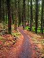 Cycle Trail in Kirroughtree Forest - geograph.org.uk - 431940.jpg