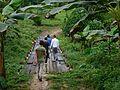 Découverte de la forêt camerounaise (2).jpg