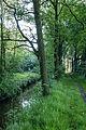 Dülmen, Naturschutzgebiet -Karthäuser Mühlenbach- -- 2014 -- 0215.jpg