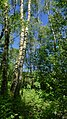 Düvels Kamp (NSG-HA 152) 04.jpg