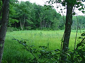 D.A.R. State Forest.jpg